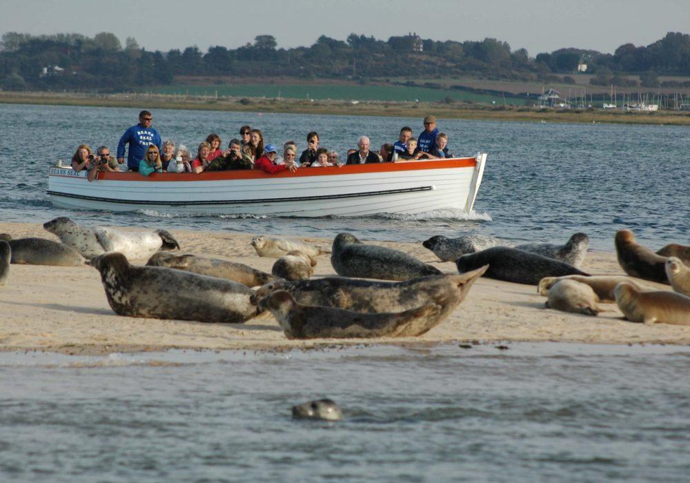 Seals at Blakeney